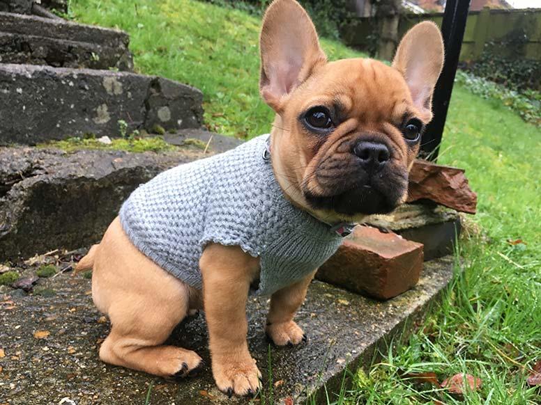 Meet our newest addition – part dog, part superhero!