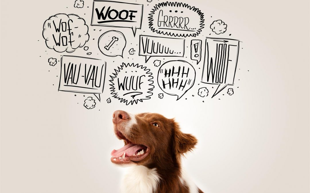 What is your dog trying to tell you? Our Founder studies the interesting topic of Canine Body Language